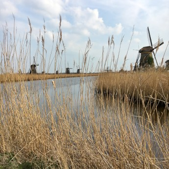 The Windmills of Kinderdijk - AmaWaterways Tulilp Tour River Cruise | ShesCookin.com