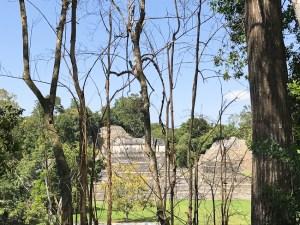 Caracol Mayan ruins - Belize | ShesCookin.com