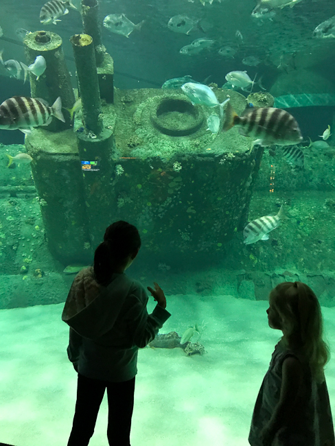 Living Shipwreck exhibit at North Carolina Aquarium at Pine Knolls Shores