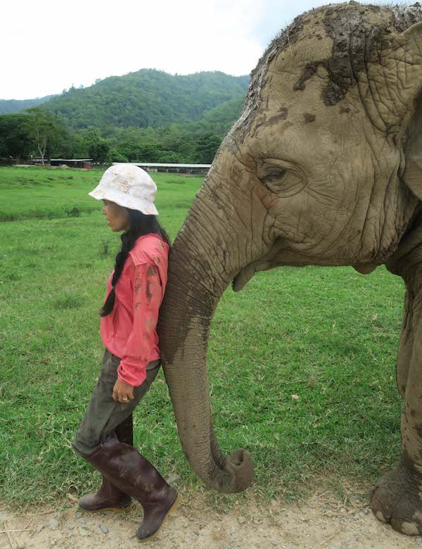 Lek Chailert with elephant at Elephant Nature Park in Changmai Thailand
