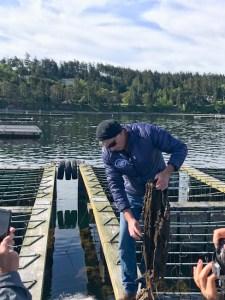 Penn Cove mussel farming