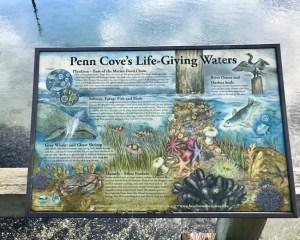 Penn Cove habitat sign