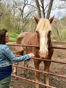 Horse at Dogwood Canyon Nature Park
