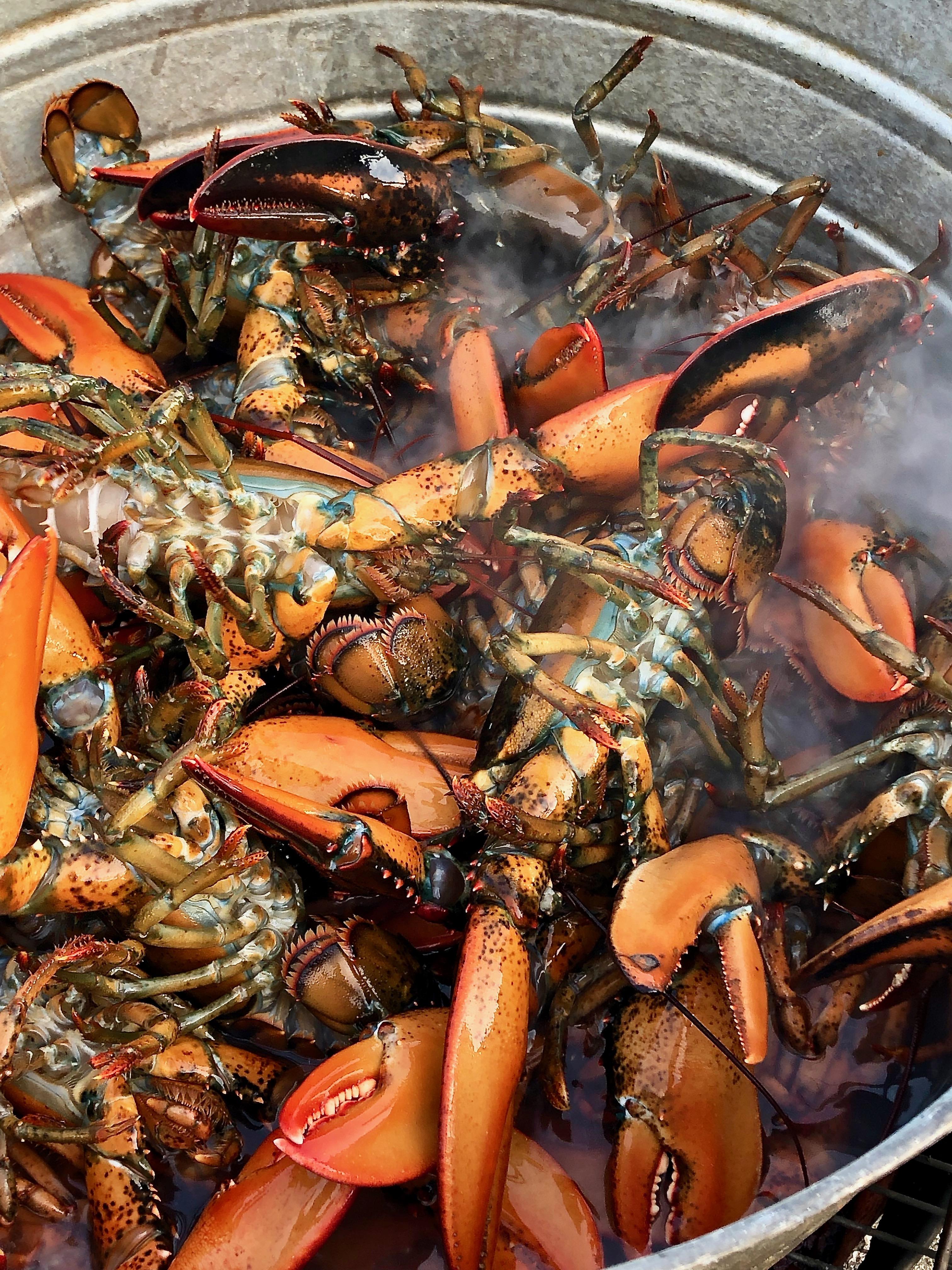 lobster bake on the beach
