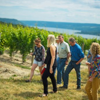 Vineyard tour at Dr. Konstantin Frank, best wineries in the Finger Lakes