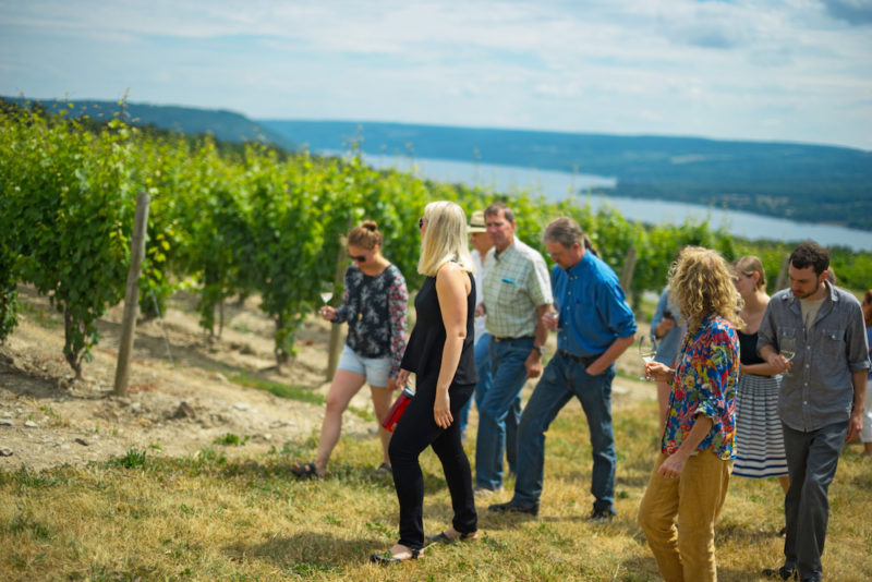 Vineyard tour at Dr. Konstantin Frank vineyards on Keuka Lake