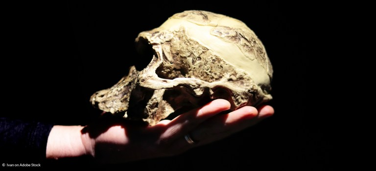 What I Love About Paleoanthropology