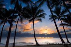 Palm Cove at sunset