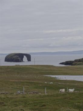 Drinking Horse, Eshaness, Shetland