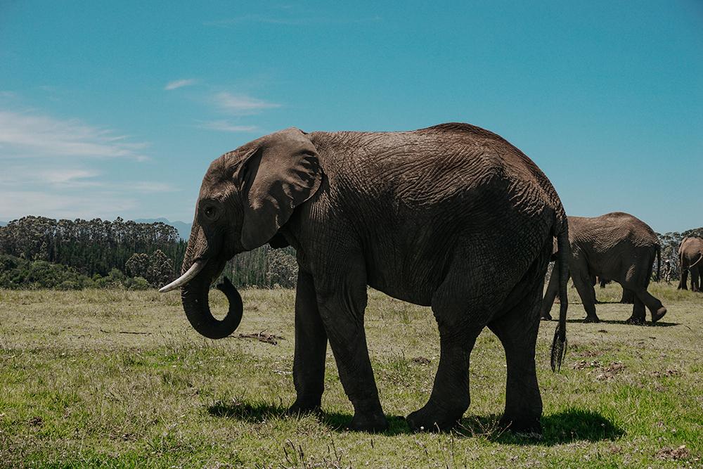 Walking With Elephants |SHESOMAJOR 5a