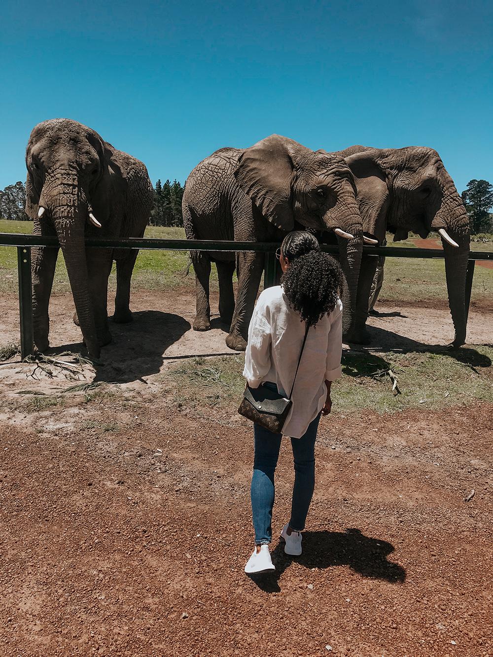 Walking With Elephants |SHESOMAJOR23a