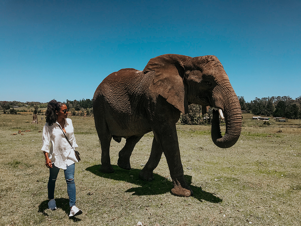 Walking With Elephants |SHESOMAJOR26a