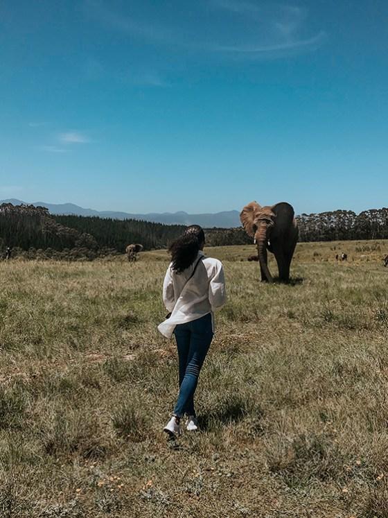 Walking With Elephants |SHESOMAJOR32ab