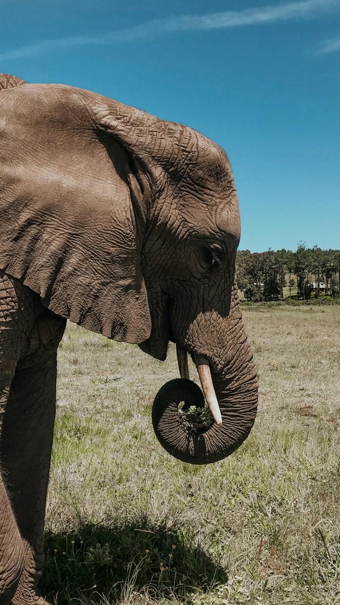 Walking With Elephants |SHESOMAJOR36a