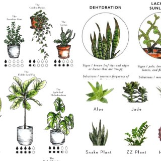 9 Essential Indoor Plant Resources to Finally Keep Them Alive