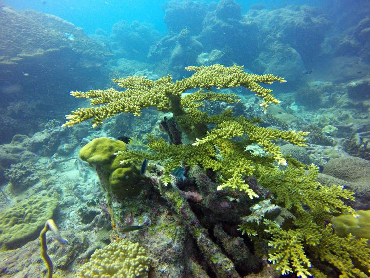 More Diving in Malaysia's Pulau Tenggol