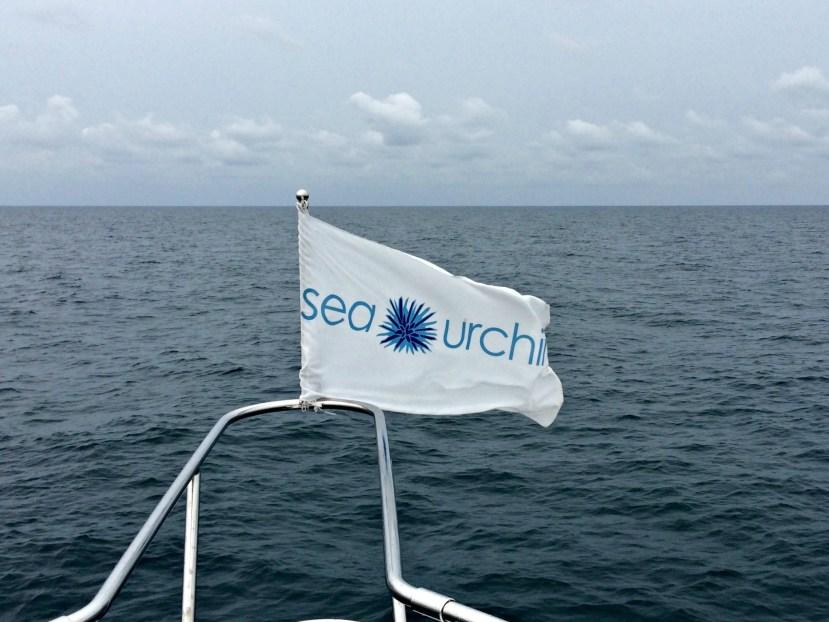 Sailfishing with Sea Urchin.