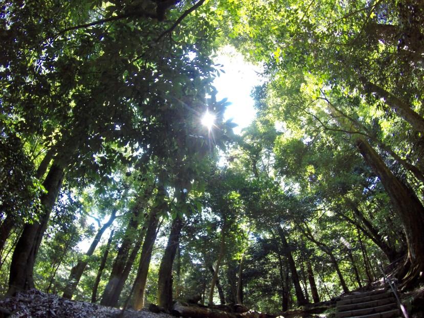 Hiking Kurama