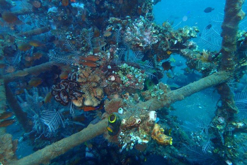 Tulamben Dive