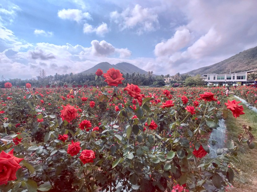 Yalong Bay International Rose Valley