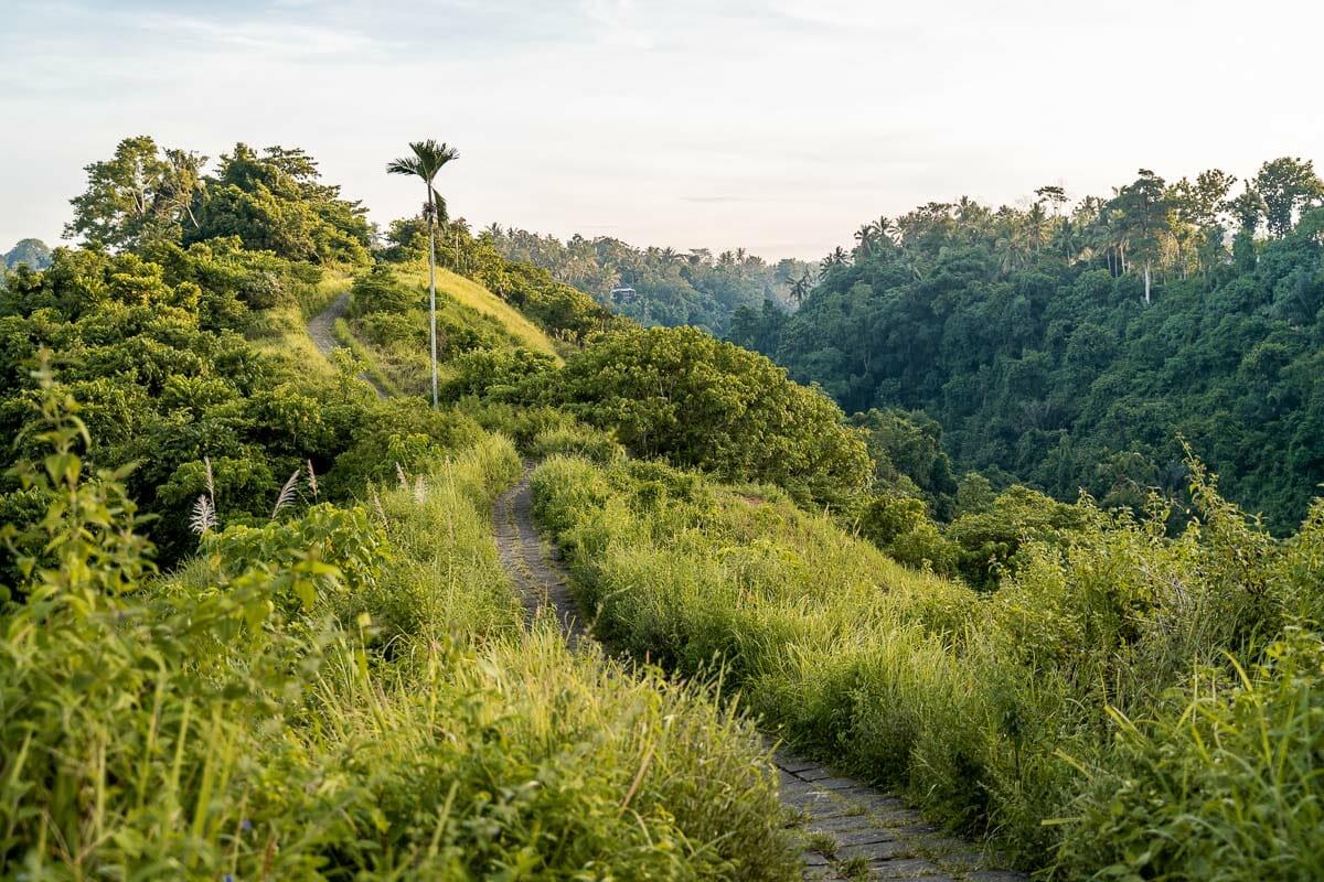 Lush green scenery at Campuhan Ridge Walk in Ubud, Bali