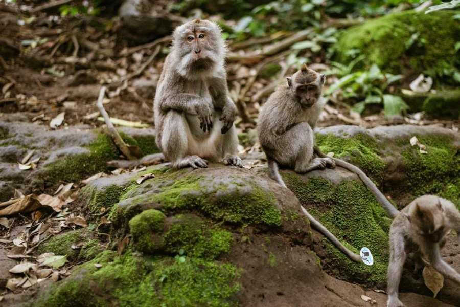 Monkeys at the Sacred Monkey Forest Sanctuary in Ubud, Bali