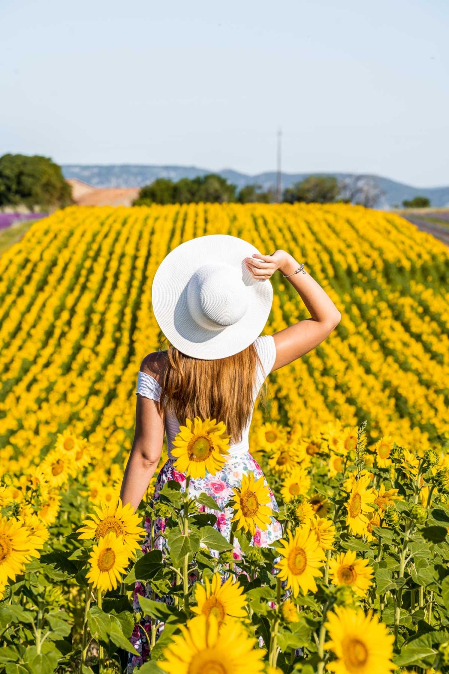 Girl in a white hat standing in the middle of the sunflower field in Provence, France