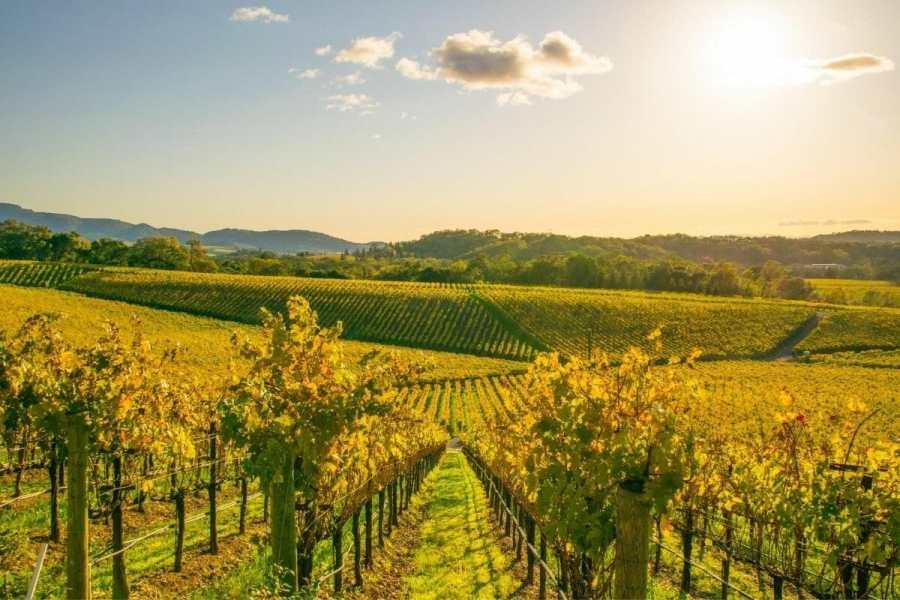 Vineyards in Napa Valley, California, USA