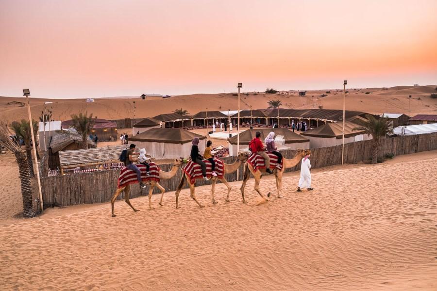 Camel riding in the Dubai Desert at sunset