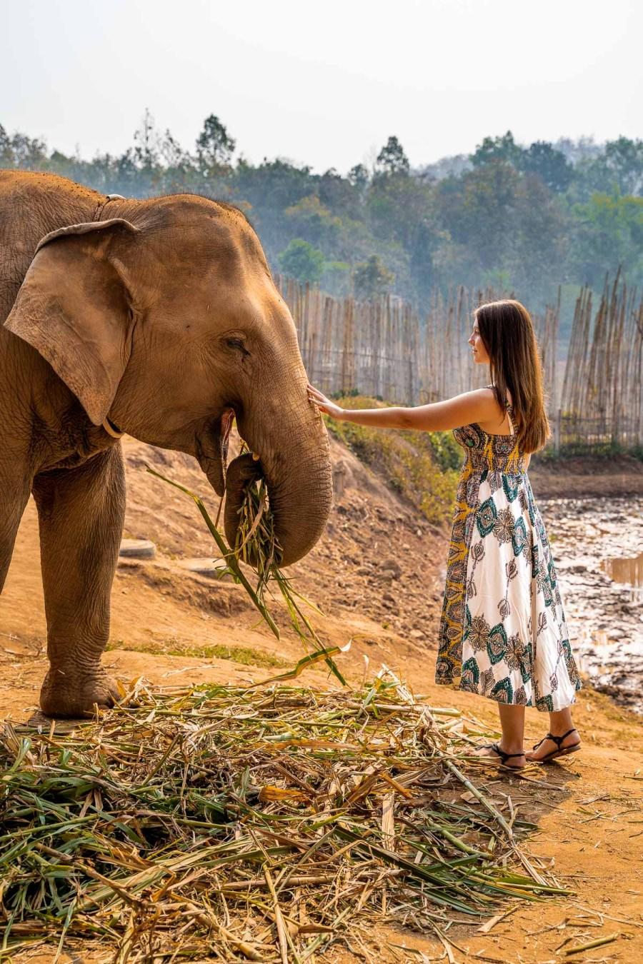 Girl feeding an elephant at Elephant Jungle Sanctuary Chiang Mai