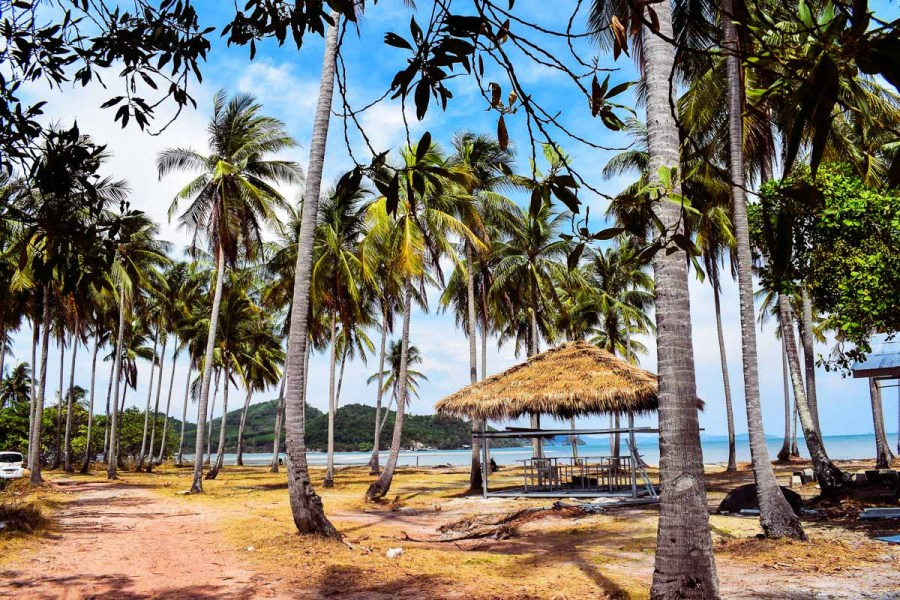 Beautiful palm trees on the island of Koh Yao Noi in Thailand