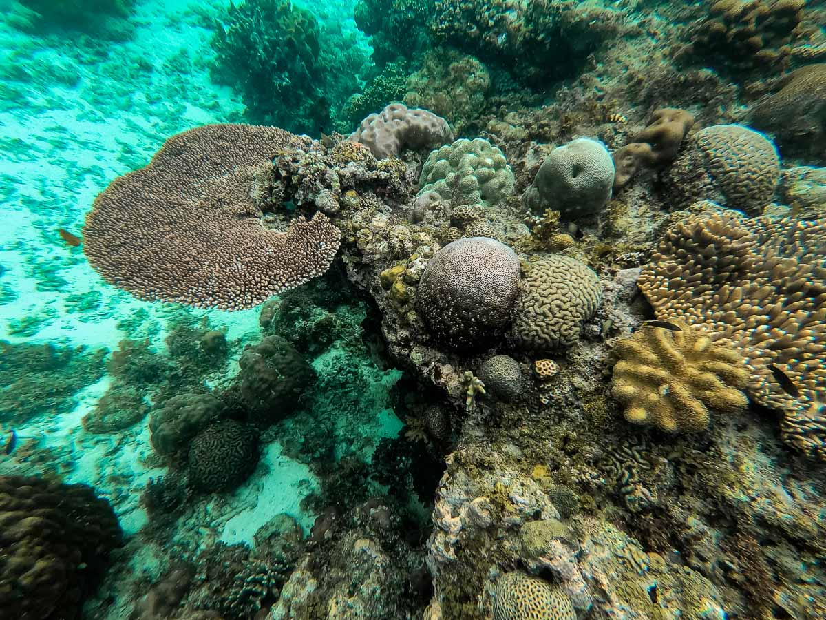 Underwater life in the Philippines