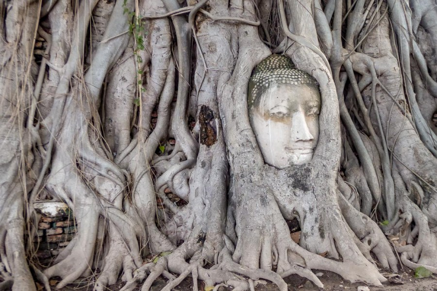 Sandstone Buddha in Tree Roots in Ayutthaya Thailand