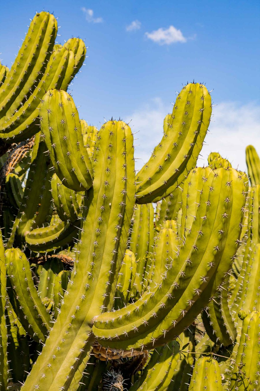 Sharp cacti at Botanicactus in Mallorca