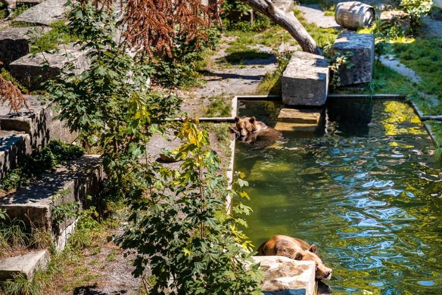 Bear Park in Bern, Switzerland