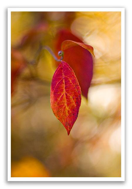 fallleafcolor7