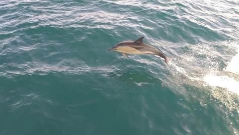dolphin_sam_mcclements