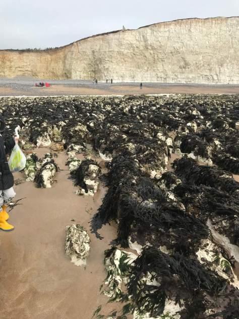 Seaweed at Birling Gap