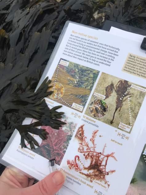 big_seaweed_search (5)