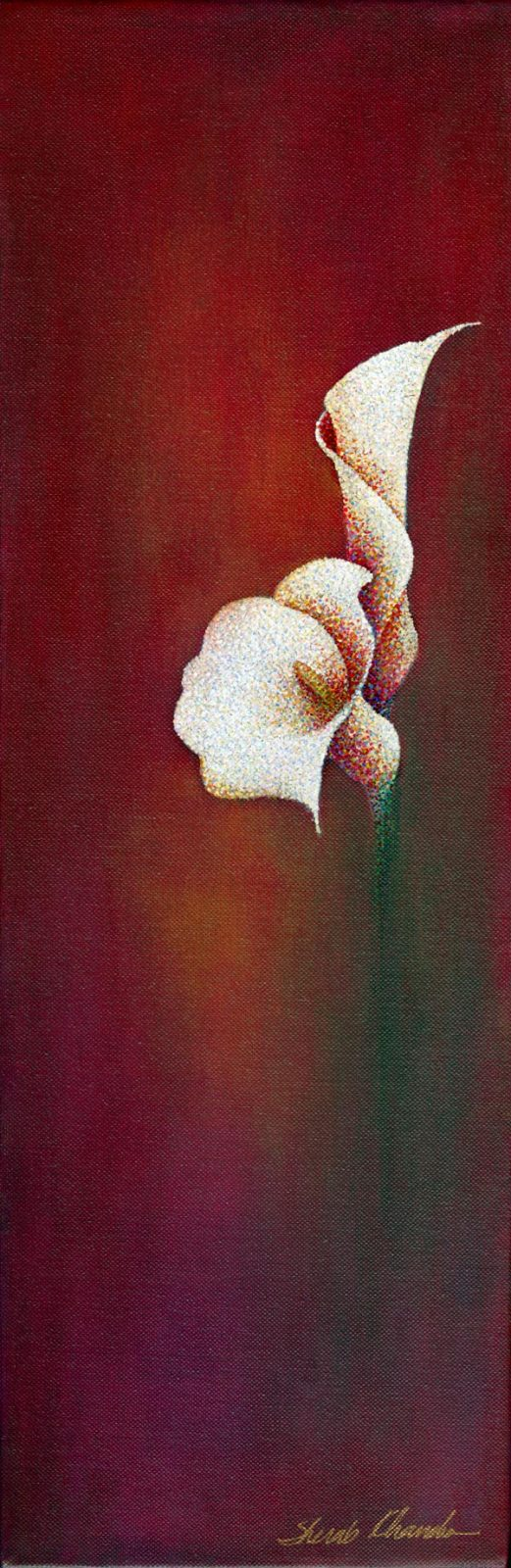 Currently Untitled Calla Lily