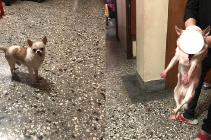 大狗咬小狗,大狗攻擊,小狗被咬,小狗和大狗可以相處嗎