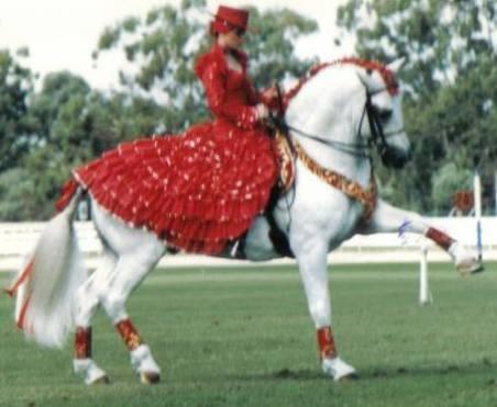 Stallion 'Falconero' struttin' his stuff