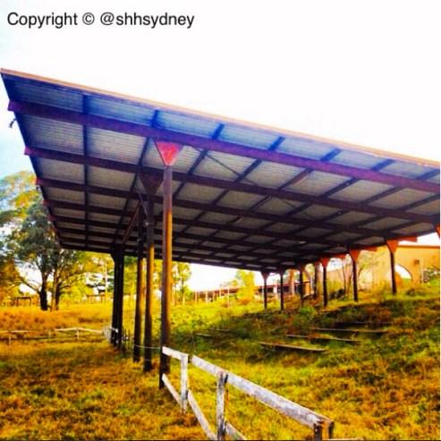 Overgrown outdoor stadium