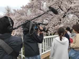 国立 桜 取材