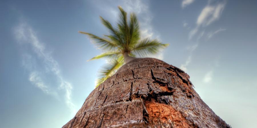 Вид на пальмовое дерево снизу