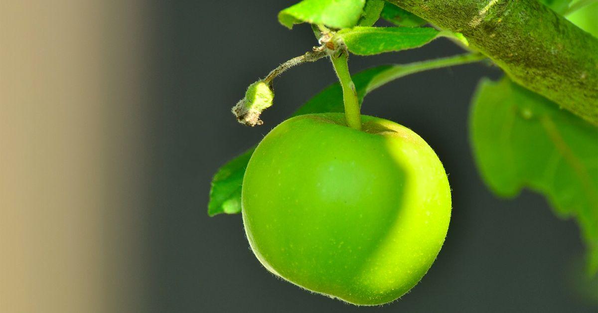 Adelgazan las Manzanas