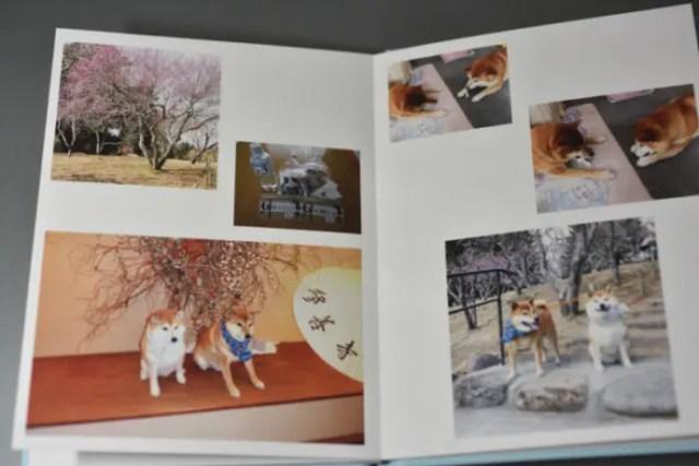 柴犬と思い出の写真