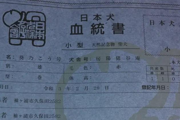 日本犬保存会血統書