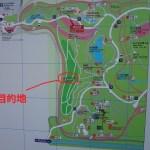 柴犬動画!昭和記念公園のこもれびの丘散策路でカメラから全力で逃げる柴犬まるが可愛い!