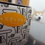 チーズタルト専門店PABLOでミディアムチーズタルトに挑戦!柴犬まるがタルト食べたすぎで笑った!